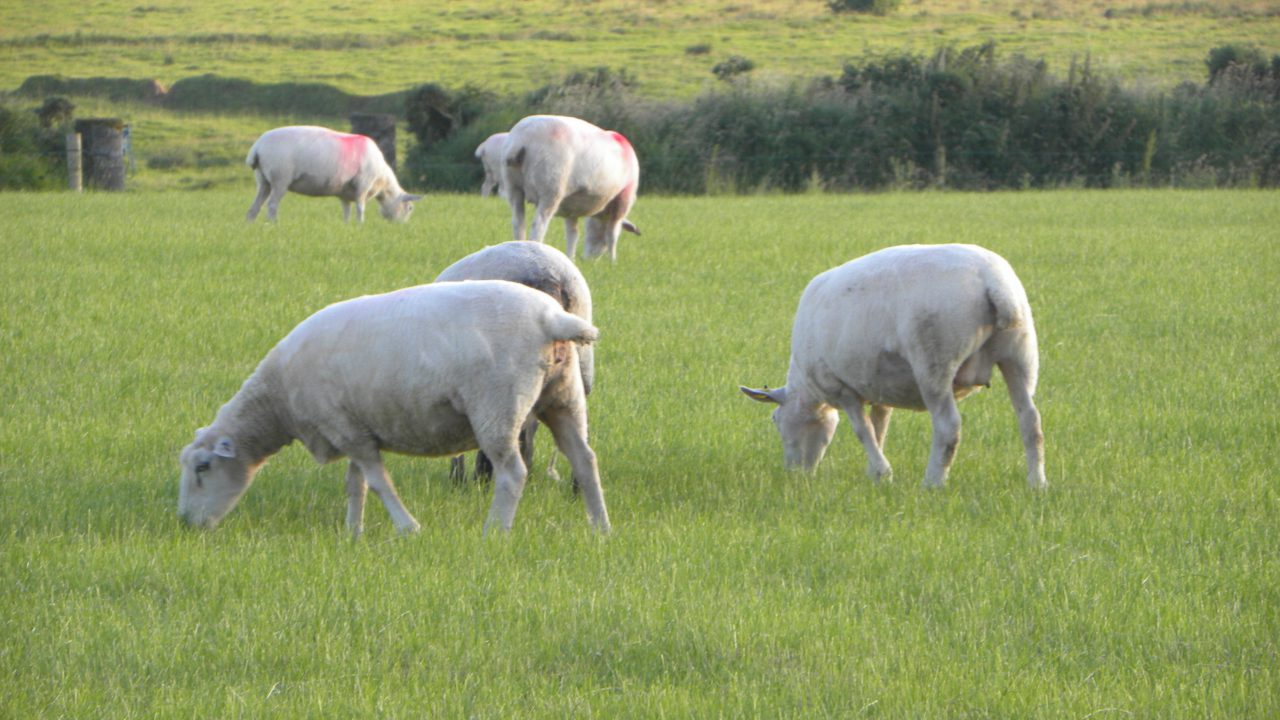 Are your ewes ready for the upcoming breeding season?