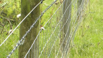 New sheep fencing scheme now open for online applications