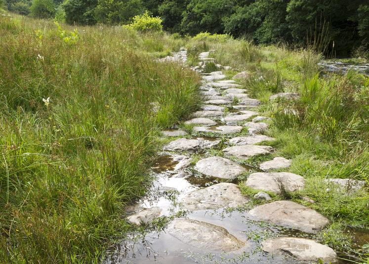 Ireland facing 'massive fines' for commonage undergrazing