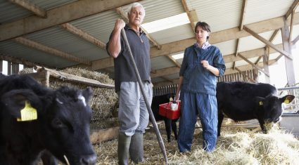 Tips: Average veterinary/animal health costing dairy farmers €60/cow