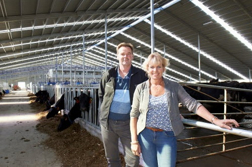 Milking starts on world's largest robotic dairy farm