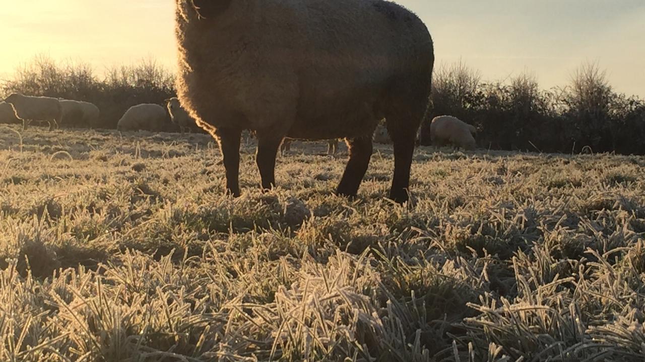 Freezing temperatures to remain this week Met Eireann says
