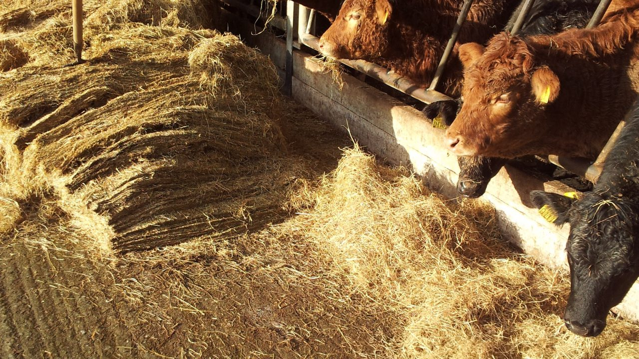 These tips from Teagasc will keep beef farmers busy this December