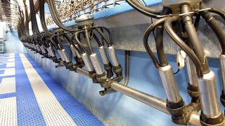 'Milk Supply Reduction Scheme must not be hindered by processors'