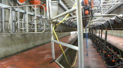 Price downturn could see UK dairy farmer numbers plummet warns farmers' union