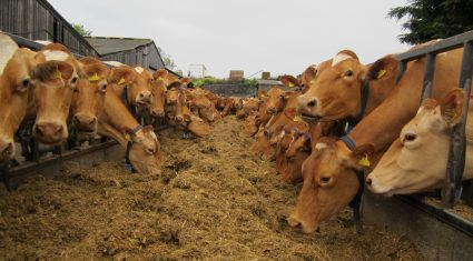 'If you've had enough of milking cows, get out of the parlour and employ someone better'