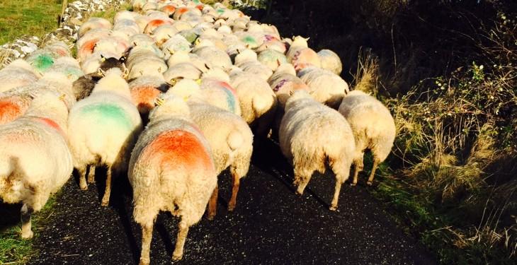 Cold, windy and wet week ahead, says Met Eireann