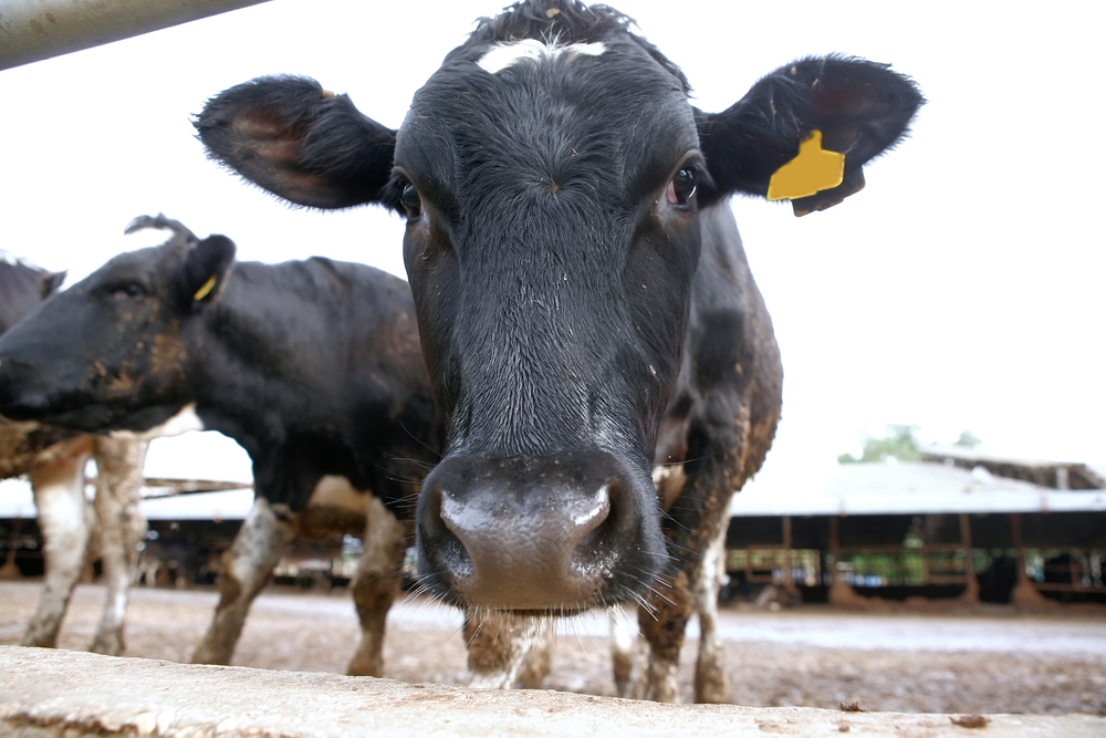 30% increase in milk output planned for Teagasc Mayo region
