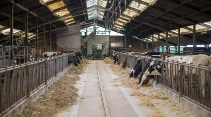 Intervention price barely covers 60% of dairy production costs, says EU farmers union