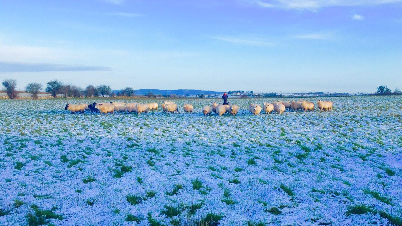 Snow on the way as Met Eireann issues warning