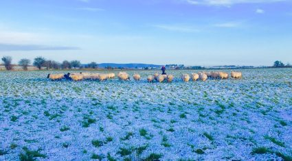 Snow on the way as Met Eireann issues warning