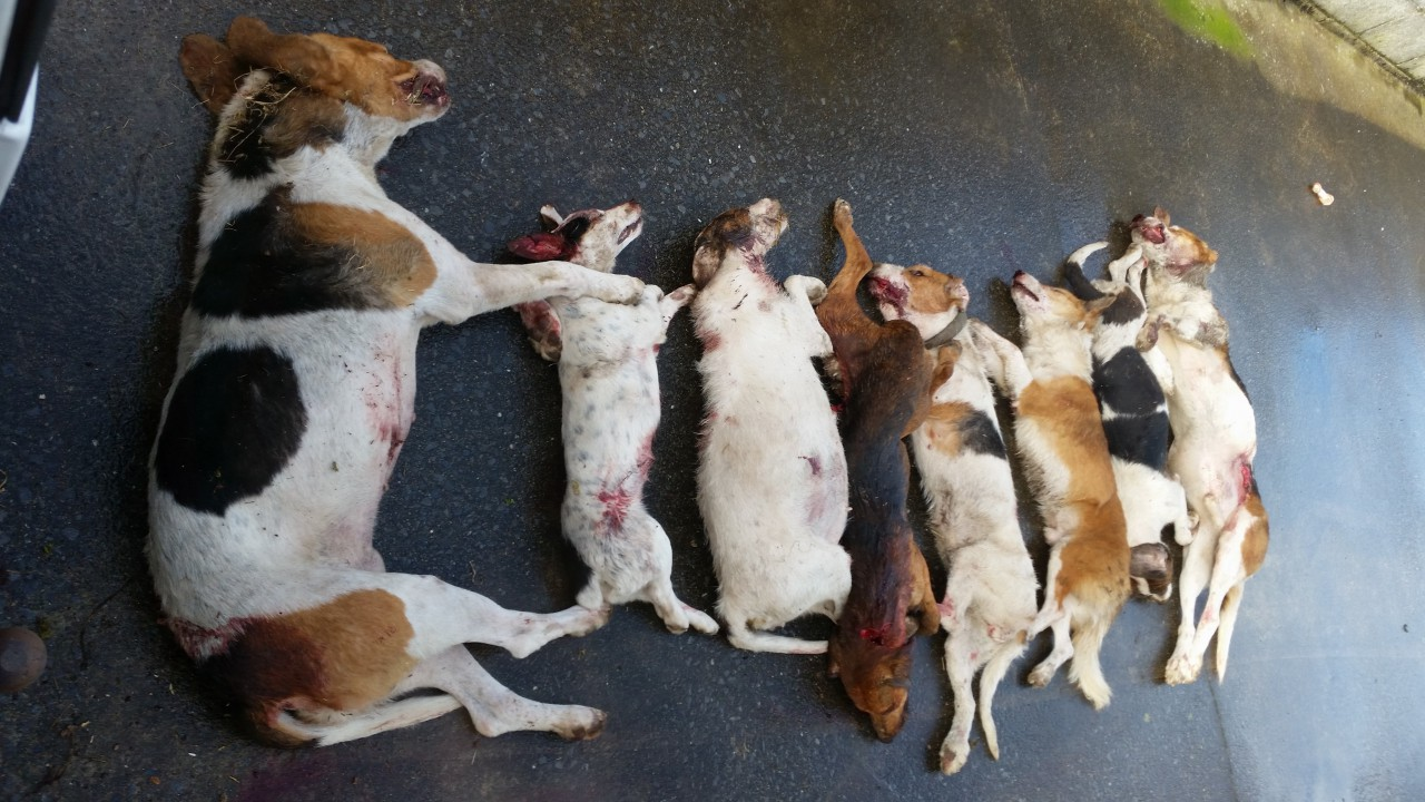 Eight dogs shot after Clare sheep attack