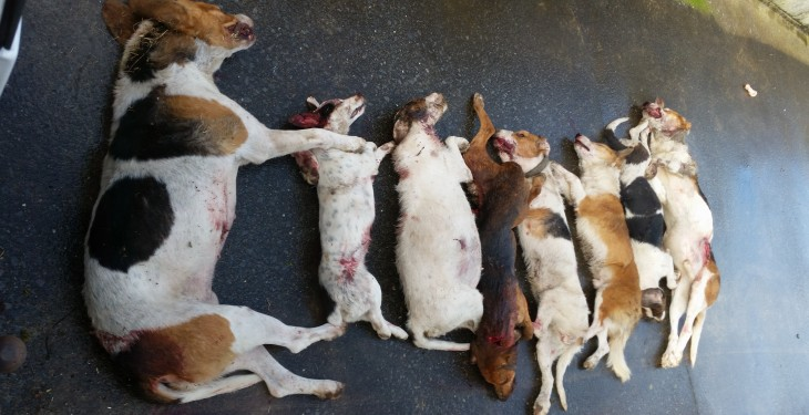 60% of farms suffer from dog attacks, 96% would shoot attacking dogs on sight