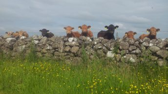 20 common questions farmers are asking – GLAS Scheme