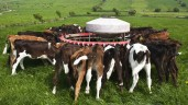 Farmers urged not to feed antibiotic milk to calves this spring