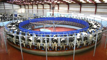 Dairy expansion: 'Alarm bells should be ringing now'