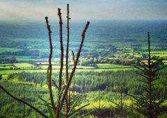 Northern Ireland's forestry development sector in peril