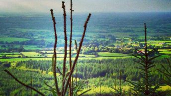 Farmer planting drops by 67% under 'forestry programme'