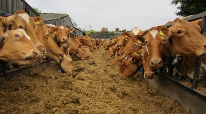 Get paid €17,500 to become a dairy farm manager