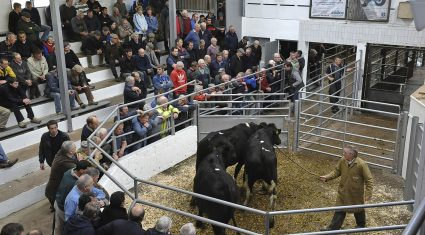 Dairy heifer prices up €100 on last year