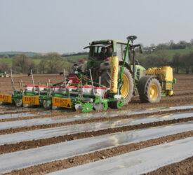"""玉米种植者确保可分解薄膜的使用""""减损"""""""