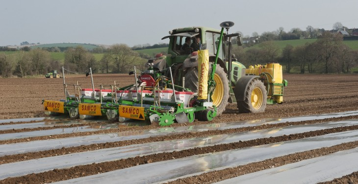 Maize and beet need temperature boost now – Teagasc
