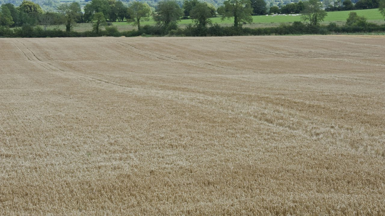 How to maximise your grain margins