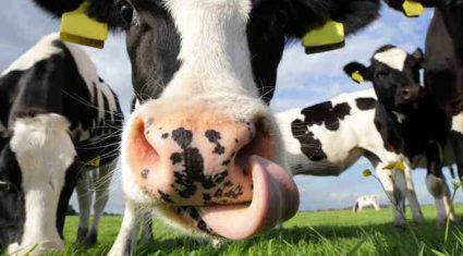 Coveney announces €35m investment in dairy industry