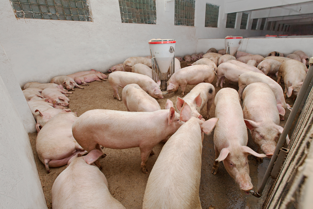 There's no problem with foreign pigmeat as long as it's labelled, says pig producer