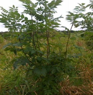 Cork company could help eliminate ash dieback – Sean Kelly
