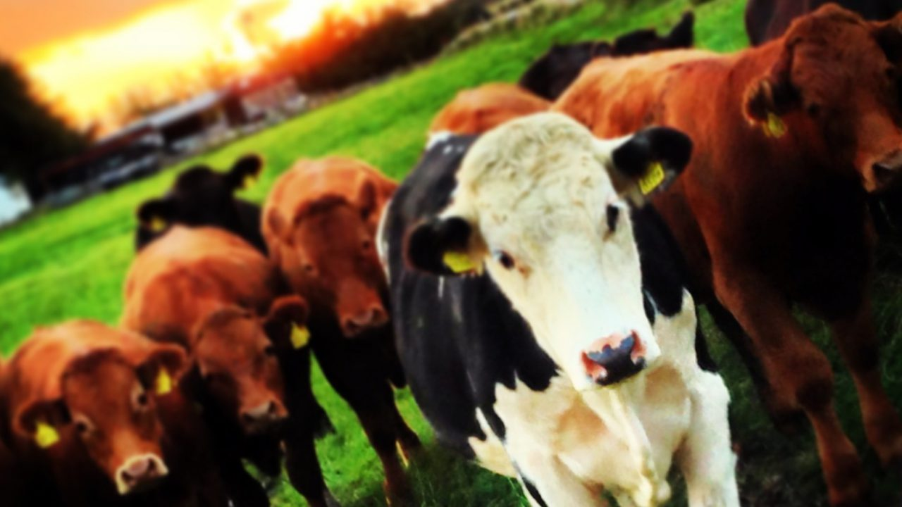 Department expects large number of 'new' farm partnerships in coming months