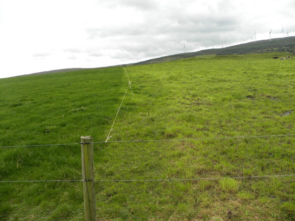 grazing grass