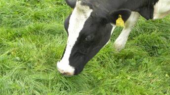 Key to soil fertility is deeper than just grass reseeding