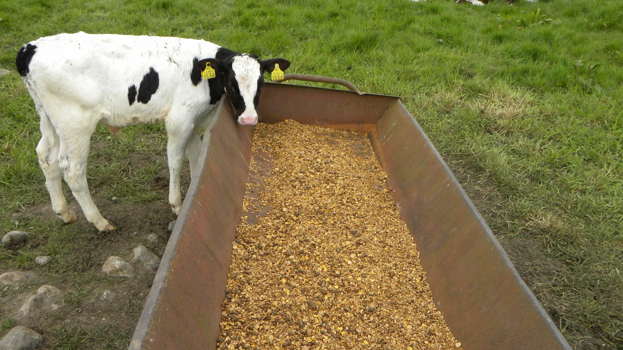 Feed industry furious at BSE slur