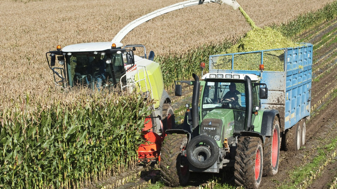 Department cancels trials on uncovered maize