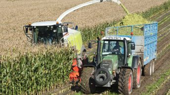 Bringing growers and cattle farmers together with new maize contracts