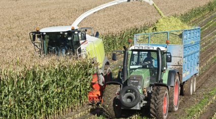 GM crops to be banned in Northern Ireland