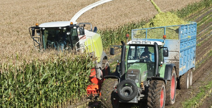 Forage maize harvest set to run late this year