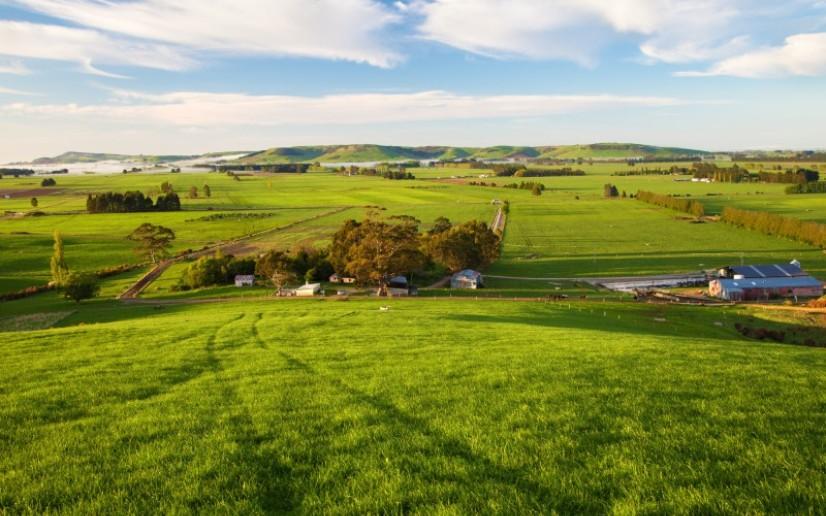 Kiwi farm for sale