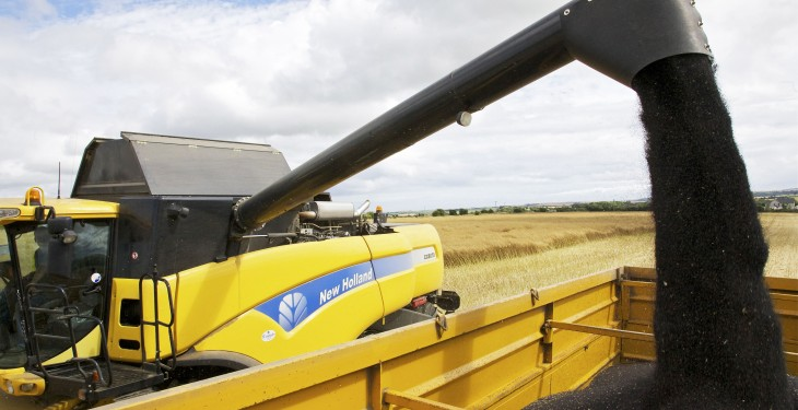 Oilseed rape: Alternative methods to ploughing could save you money