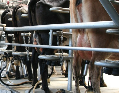 How to cope with the challenge of dairy volatility – Department