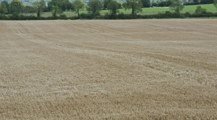 'Northern crop growers face many challenges under new CAP'