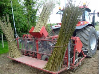 Willow and miscanthus schemes face chop (only 4 farmers apply in 2015)
