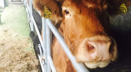 Determined to eradicate TB in Northern Ireland