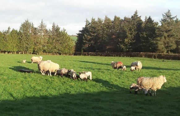 Soil test now for better grass production – Teagasc