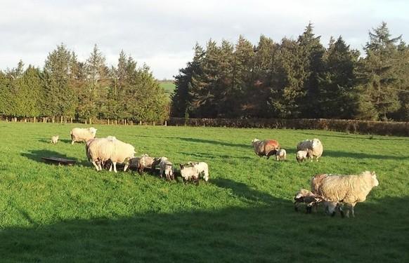 Soil test now for better grass production – Teagasc