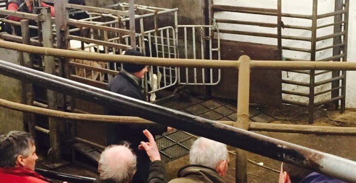 Exchange rate drives live cattle exports to Northern Ireland up 38%