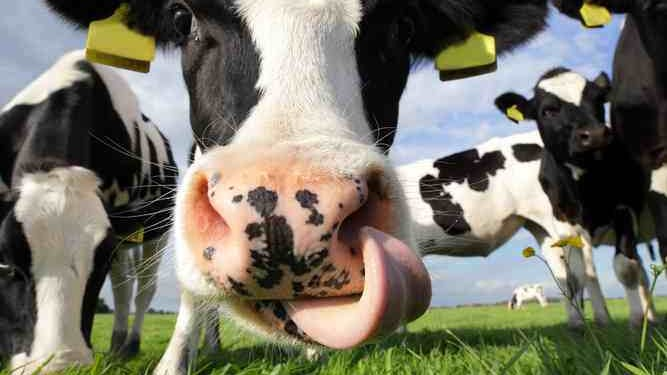 Milk quotas to end within days, but why were they introduced?