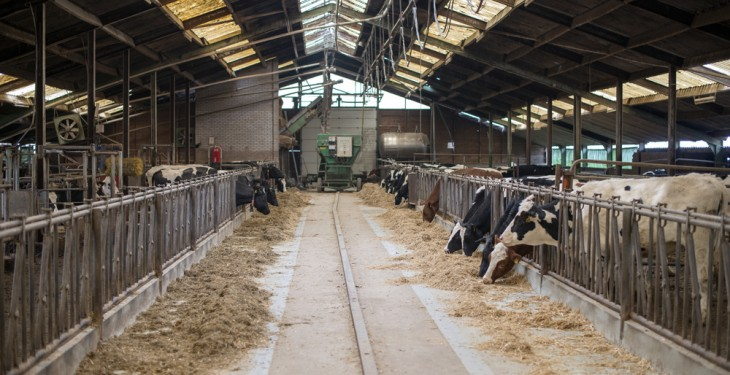Milk prices only covering 85% of German farmers costs