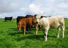 Department issues liver fluke forecast for winter 2018